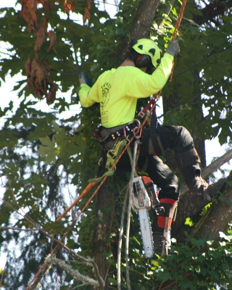 Arborist Auckland central