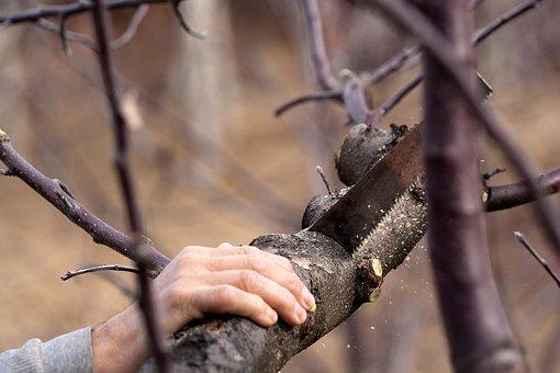 Auckland Tree care