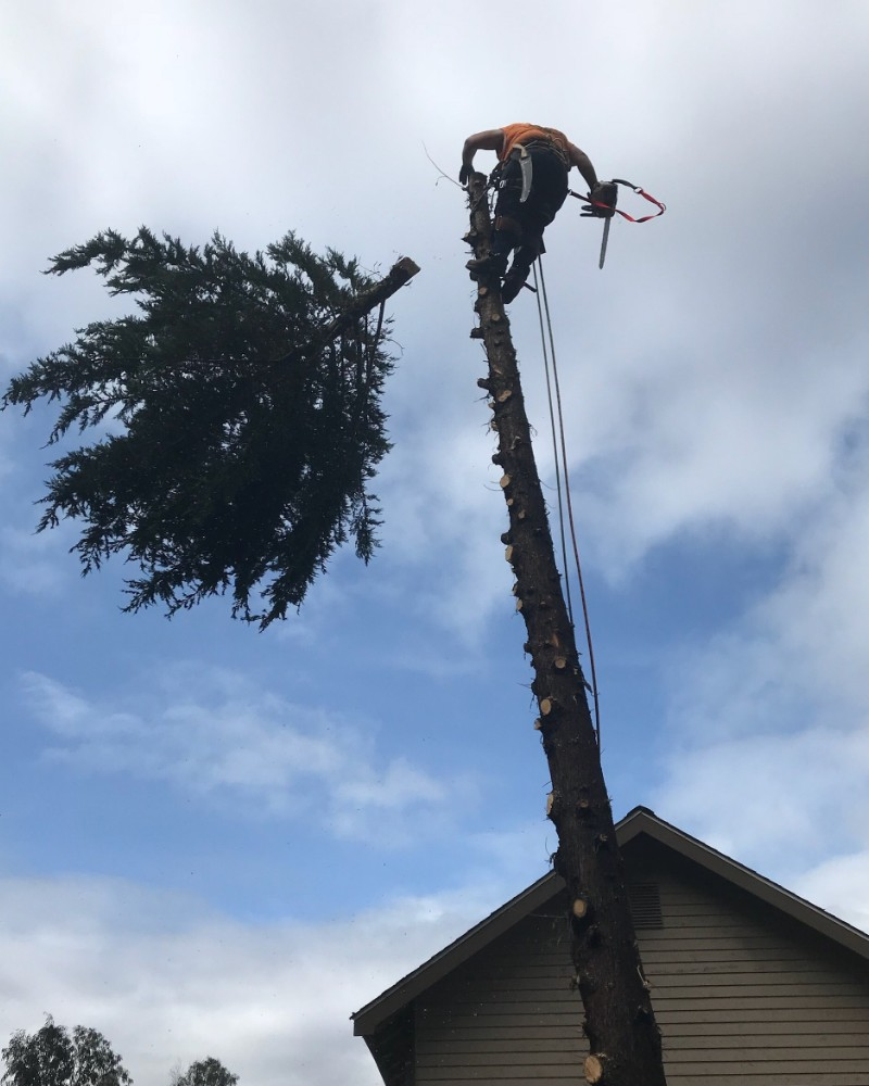 Palm tree removal Auckland