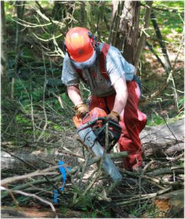 Tree cutting auckland