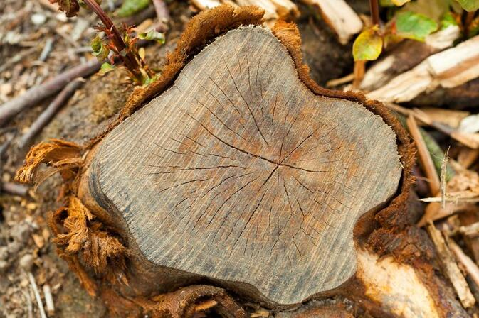 Tree felling auckland