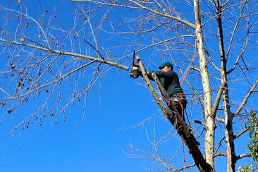 Tree services auckland